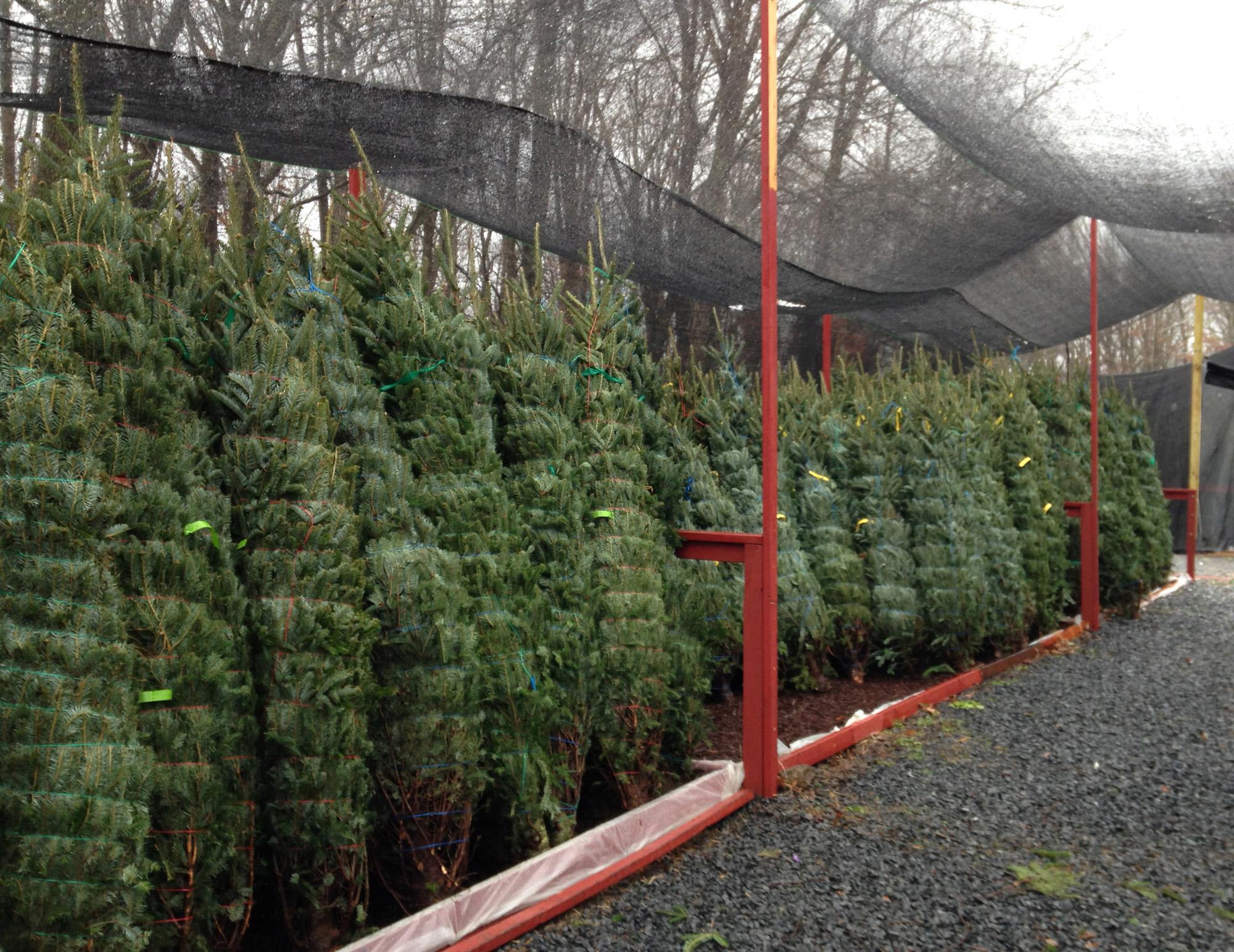TreeStorage2